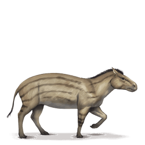 cheval divin hyracotherium