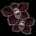 Les petits cadeaux de Noël  Orchidee-noire