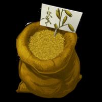 Graines d'avoine